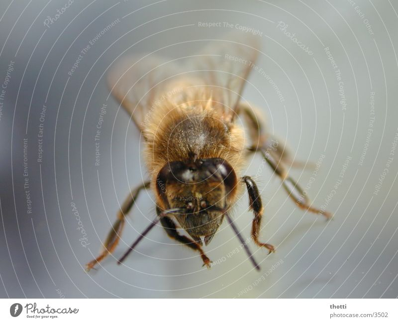 Look in my eyes Bee Insect Animal Macro (Extreme close-up) Close-up