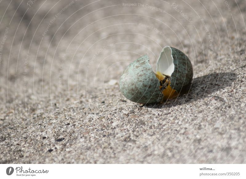 Green Life Death Gray Stone Sand Broken Egg Doomed Survive Fiasco Hopelessness Eggshell Bird's egg