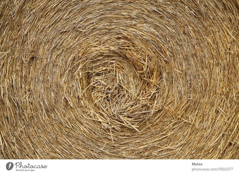 The texture of the pressed straw roll close-up agriculture background dry farming grass hay closeup natural nature organic season harvesting wheat agricultural