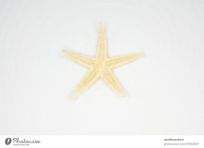 one star - starfish Starfish Souvenir One star Stars star-shaped decoration Decoration Star (Symbol) Dried plan white background