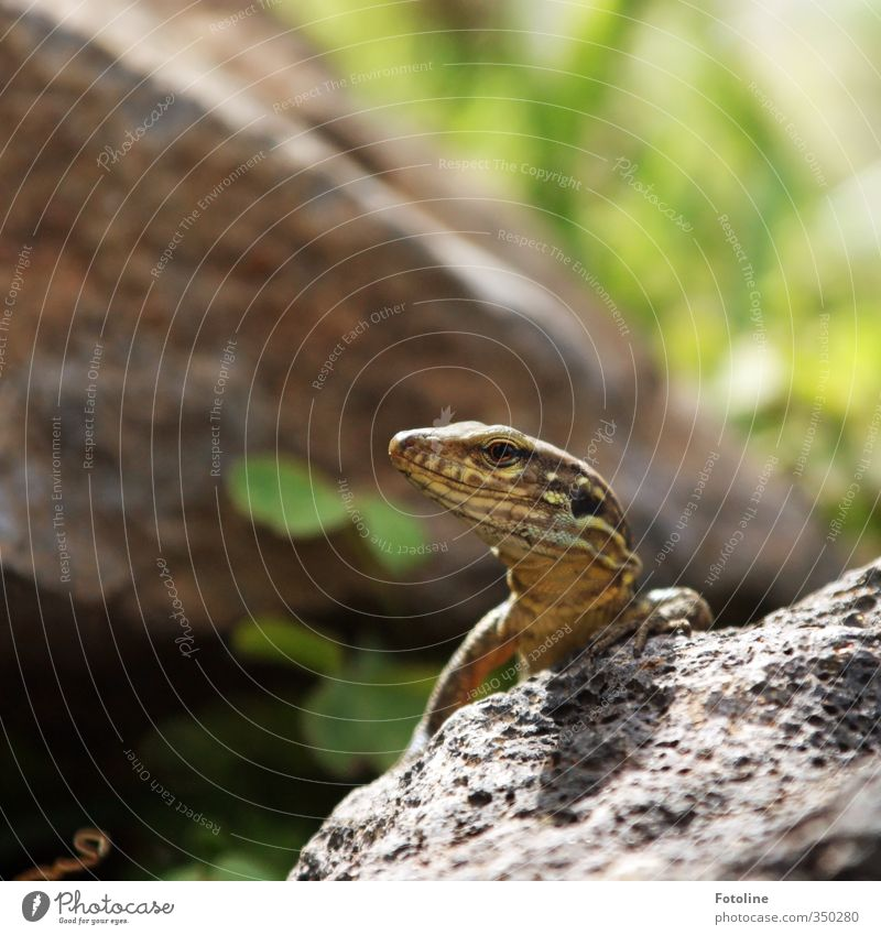 What's that? Environment Nature Animal Elements Earth Wild animal Animal face 1 Small Near Natural Saurians Lizards Reptiles Colour photo Multicoloured