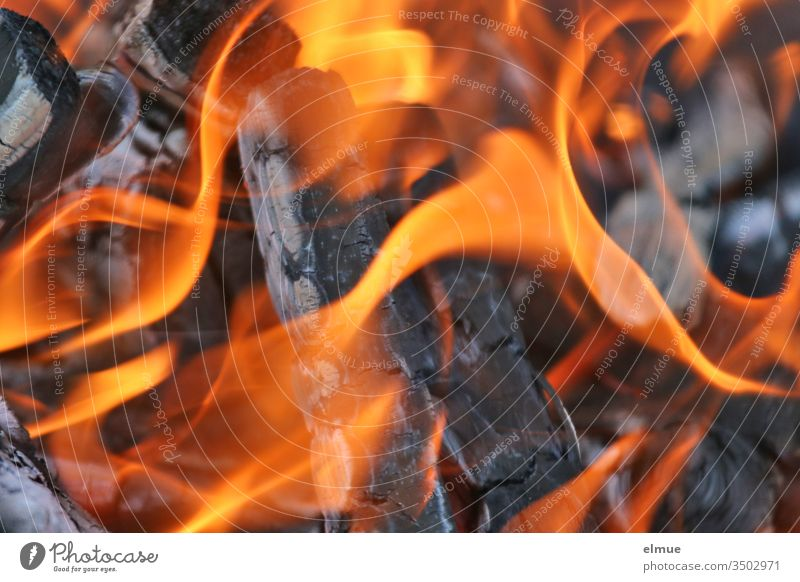 blazing flames of burning wood in a fire bowl Fire Flame Burn Hot Blaze blaze incinerate sb./sth. Dangerous Wood Ignite Physics Kindle Charring ash Orange