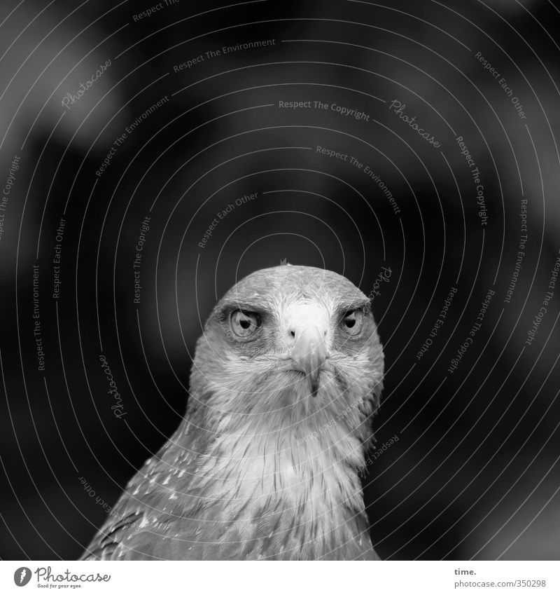 abandoned ... Animal Wild animal Bird Animal face Bird of prey 1 Observe Crouch Looking Exceptional Natural Willpower Brave Watchfulness Authentic Perturbed