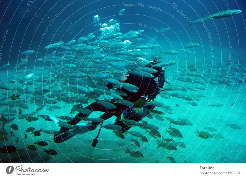 Total blue underwater world. Elements Water Ocean Animal Fish Flock Cold Wet Natural Blue Diver Underwater photo Colour photo Multicoloured