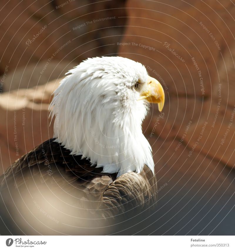 Your Majesty I Environment Nature Animal Rock Mountain Bird Animal face 1 Esthetic Bright Natural Wild Eagle Bald eagle Majestic Feather Colour photo
