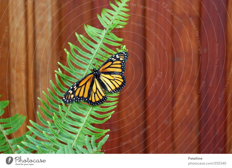 contrasts Nature Plant Animal Fern Wild animal Butterfly Wing 1 Natural Brown Multicoloured Green Orange Black White Colour photo Interior shot Close-up