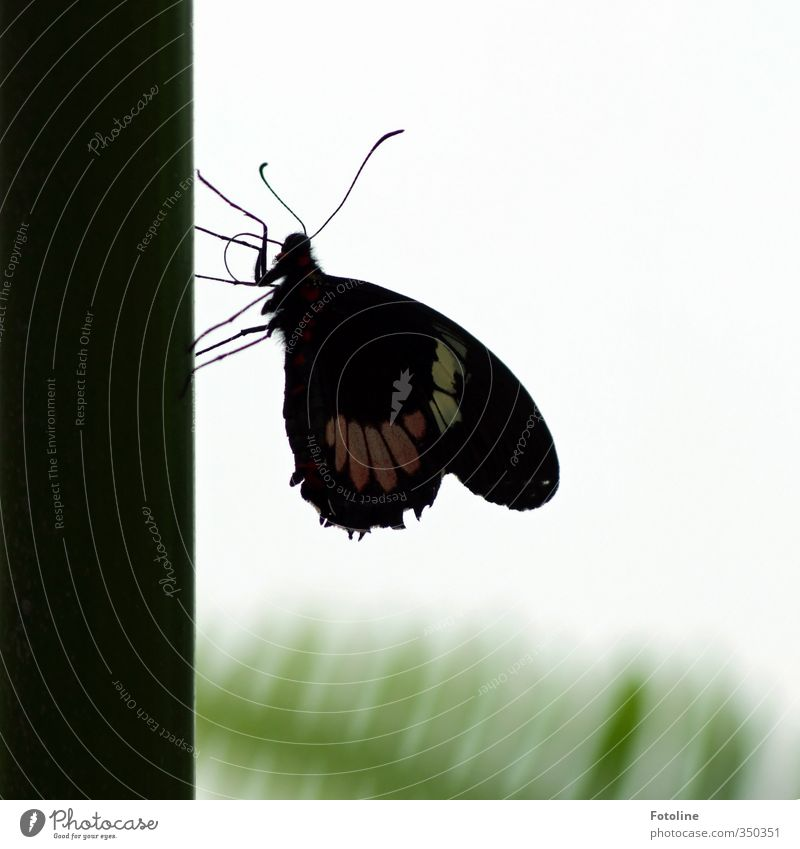 breather Environment Nature Animal Butterfly Wing 1 Bright Small Near Natural Beautiful Colour photo Subdued colour Deserted Day Light Silhouette