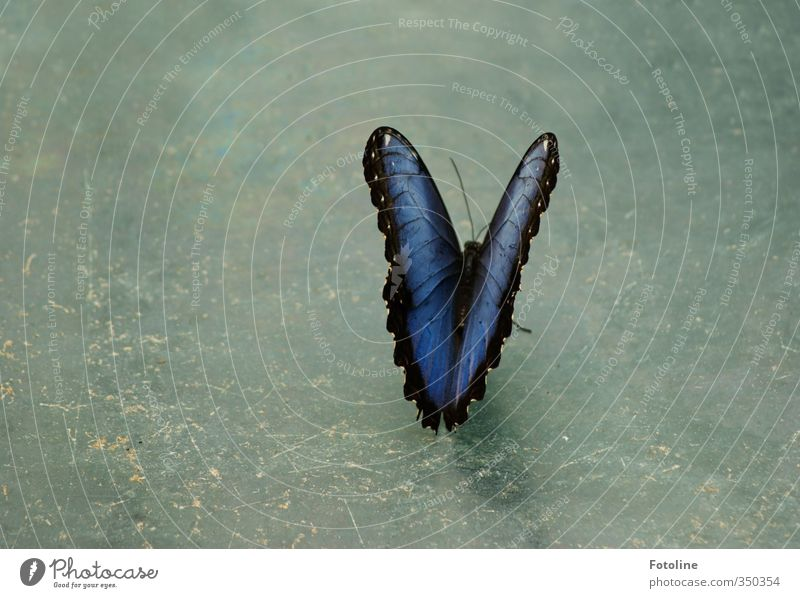Blue Beautiful Animal Environment Natural Wing Butterfly