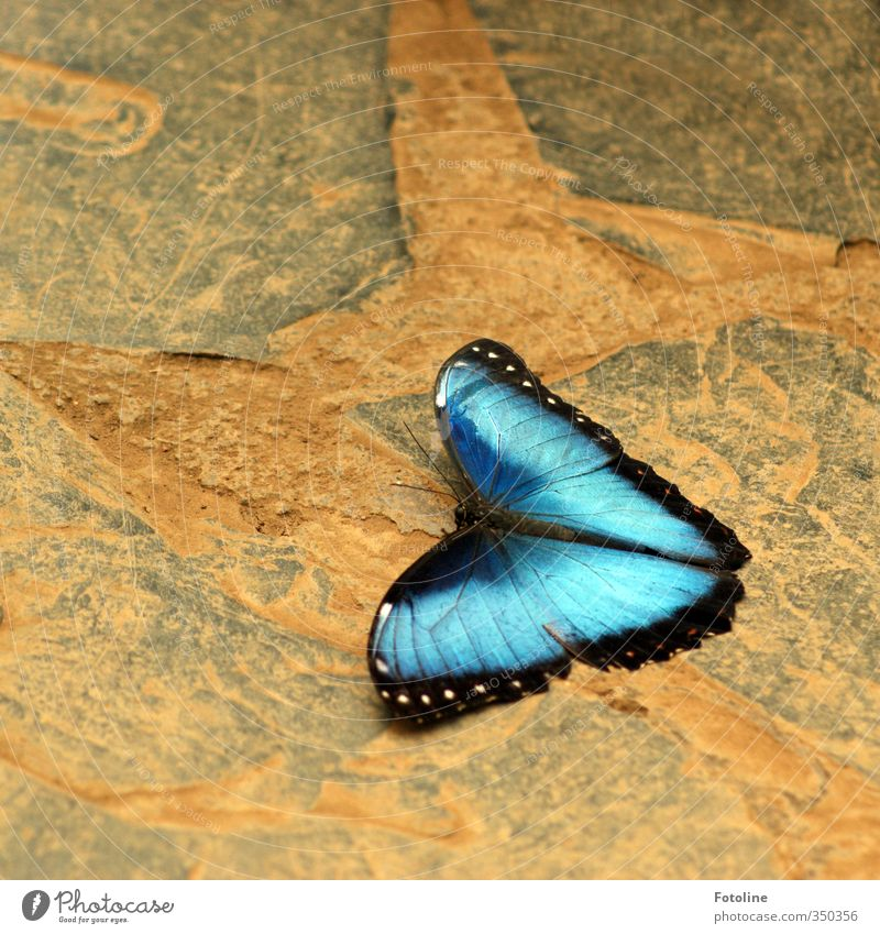 Nature Blue Beautiful Animal Environment Natural Esthetic Wing Butterfly