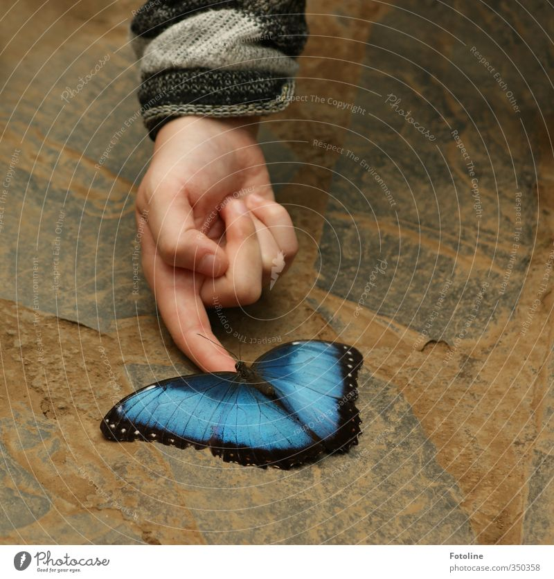 You're so blue! Come here to me! Human being Child Hand Fingers Nature Animal Butterfly Wing Athletic Elegant Beautiful Natural Blue Colour photo Multicoloured