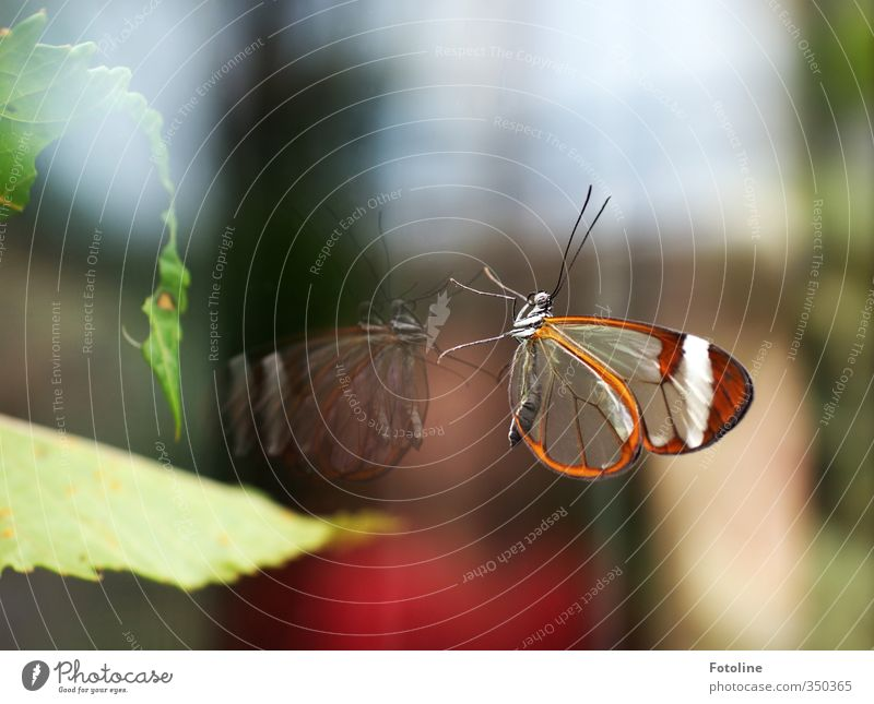 Nature Green Beautiful Plant Animal Leaf Environment Natural Brown Glass Esthetic Butterfly Slice