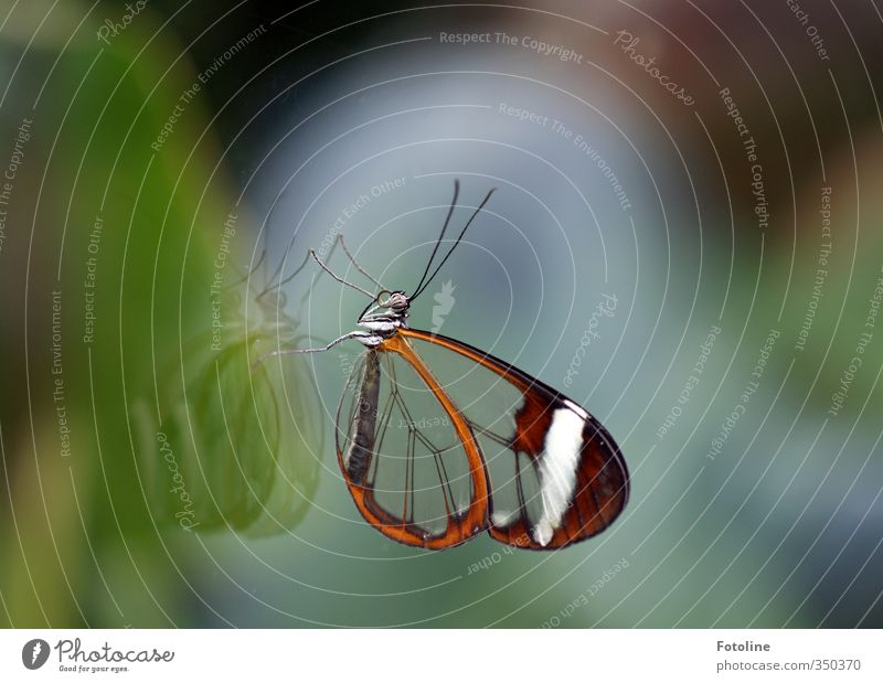 Nature Animal Natural Wild animal Glass Wing Near Butterfly Feeler Pane