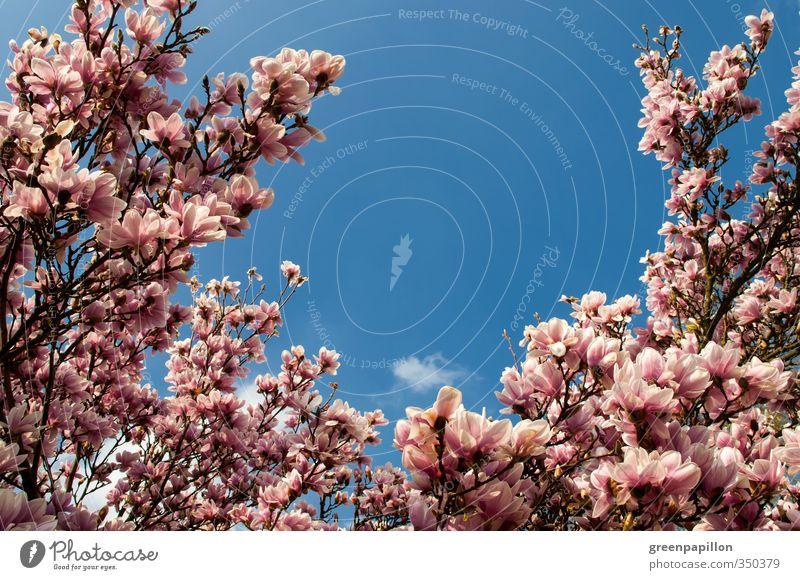 Nature Blue Beautiful Plant Tree Calm Love Spring Blossom Garden Pink Park Health care Idyll Wellness Fantastic