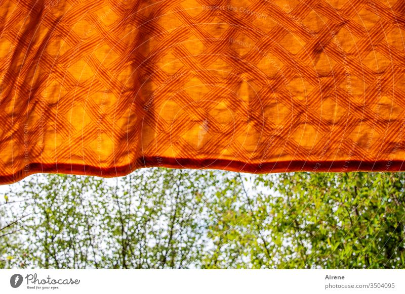 freshly washed Blanket Laundered Laundry Damp Dry Rag Duvet hung spring huts fresh green bushes Beautiful weather Orange neon colours neat Fresh kind Checkered