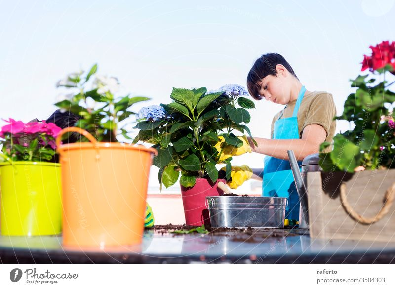 Young teenager wearing a gardener apron while gardening at terrace in a sunny day 1 two shovel care green flowerpot soil nature cultivate flora girl home