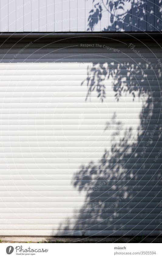 Tree shadow on garage door Light Shadow tree Garage Goal Gray White leaves lines obstacle Protection car Summer Cow Curiosity