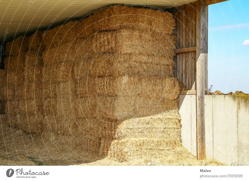 Straw in bales under a wooden canopy agricultural agriculture countryside farm harvest haystack land nature season straw summer crop farming field food gold