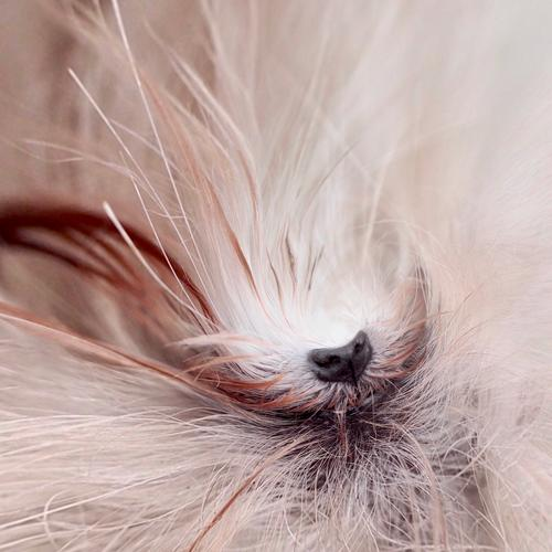 gudgeon nose Dog Maltese dog dog's nose Pelt White Pet detail Snout Close-up Nose Animal face Shallow depth of field Tiny Planet effect Detail