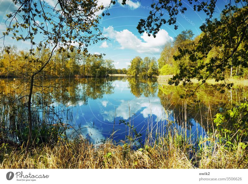 water level Lake Idyll Panorama (View) Plant Water Sky windless Nature Landscape Reflection Exterior shot Deserted Colour photo Environment Lakeside Calm