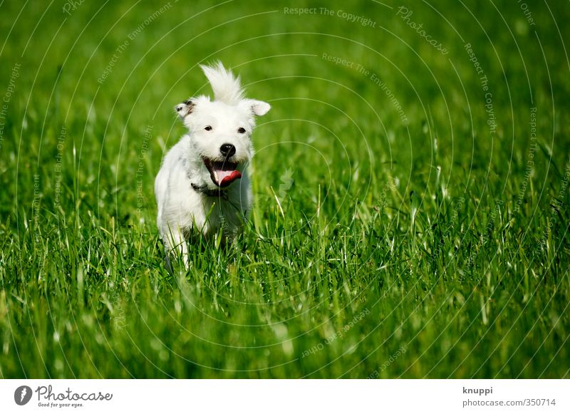 Dog Green White Animal Black Environment Meadow Warmth Life Baby animal Movement Freedom Field Leisure and hobbies Wild