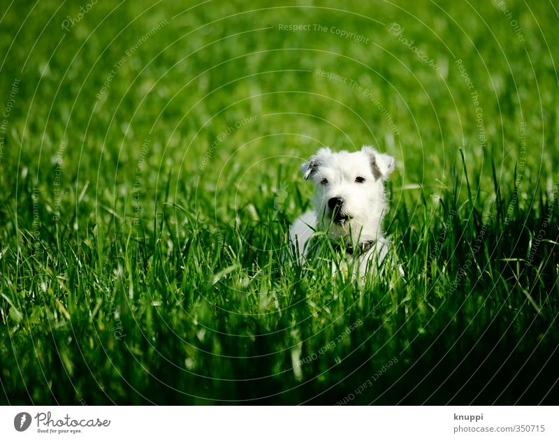 Dog Nature Green White Summer Plant Relaxation Calm Animal Black Meadow Baby animal Grass Happy Field Wild