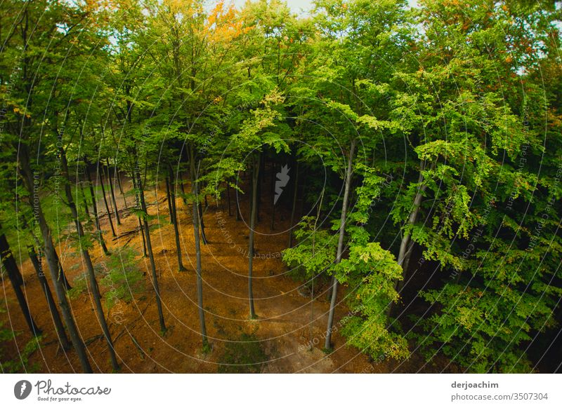 View into the forest from above, the sun is shining and everything is green. Forest Tree Nature Green Leaf Branch Tree trunk Treetop Tree bark Leaf canopy