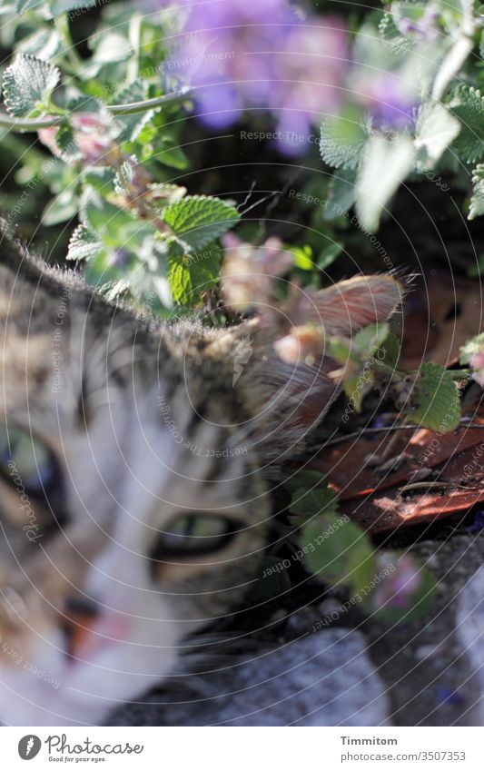 Karl dreamt of a cat...but the picture remained strangely blurred Cat cat's eyes Green Plant Blossom Flowering plant Nature May Blossoming Spring Blur