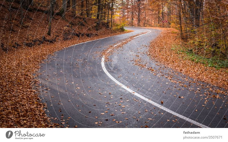 Empty, curvy road in a beautiful autumn forest Autumn route leaves Autumn leaves autumn feeling Nature Curve Freedom Landscape Environment fall Forest