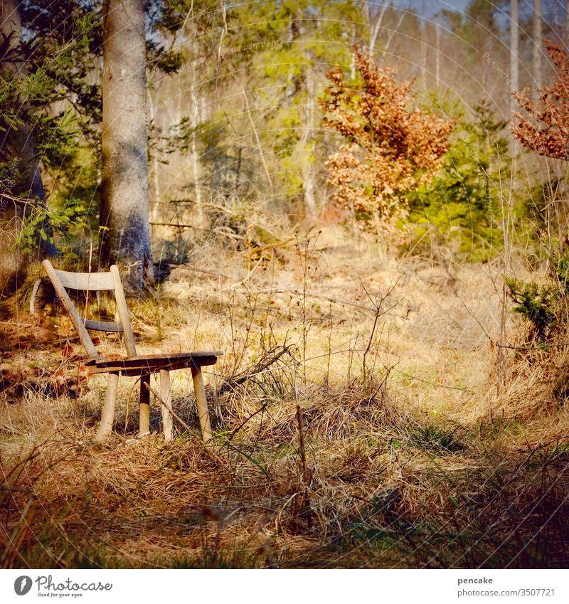 naturschauspiel Natur Wald Lichtung Sitzgelegenheit Holzstuhl Sonnenschein Abendsonne Stuhl menschenleer Abendlicht