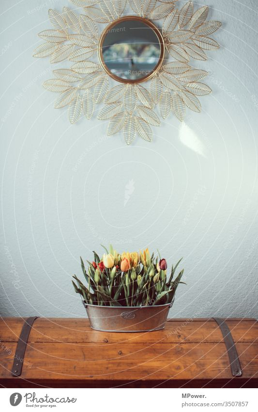 tulips in masses living room lamp Tulip field vases Mirror decorative Flowerpot Ostrich Bouquet Federal State of Tyrol spring