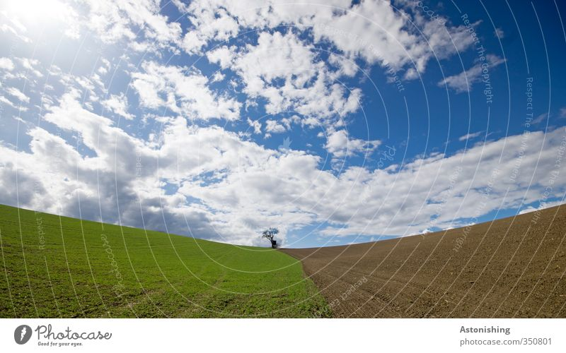 the small tree II Environment Nature Landscape Plant Sky Clouds Horizon Sun Spring Weather Beautiful weather Warmth Tree Grass Agricultural crop Meadow Field
