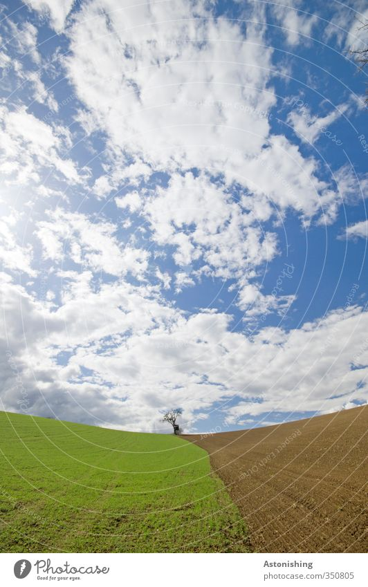 the small tree I Environment Nature Landscape Plant Sky Clouds Horizon Spring Weather Beautiful weather Tree Grass Meadow Field Hill Stand Blue Brown Green
