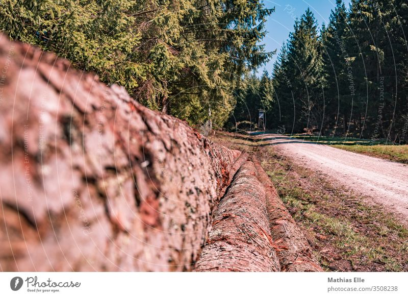 Tree trunks along the forest path Spruce forest Rural conservation Nature Environment Sustainability wood Coniferous forest Forest Authentic Deserted