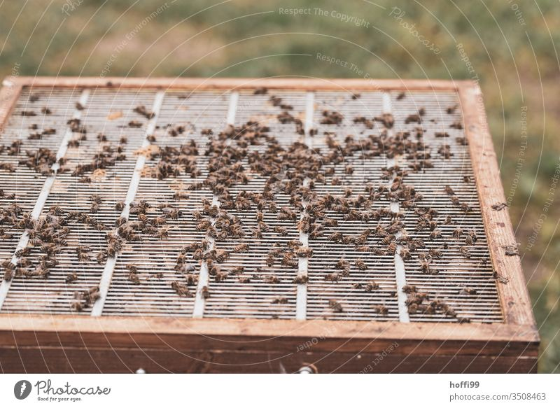 Insight into an open beehive Beehive Honey-comb beekeeping Apiary Honey bee Bee-keeping Bee-keeper keep beekeepers Honeycomb Insect Nature Colony Summer Food