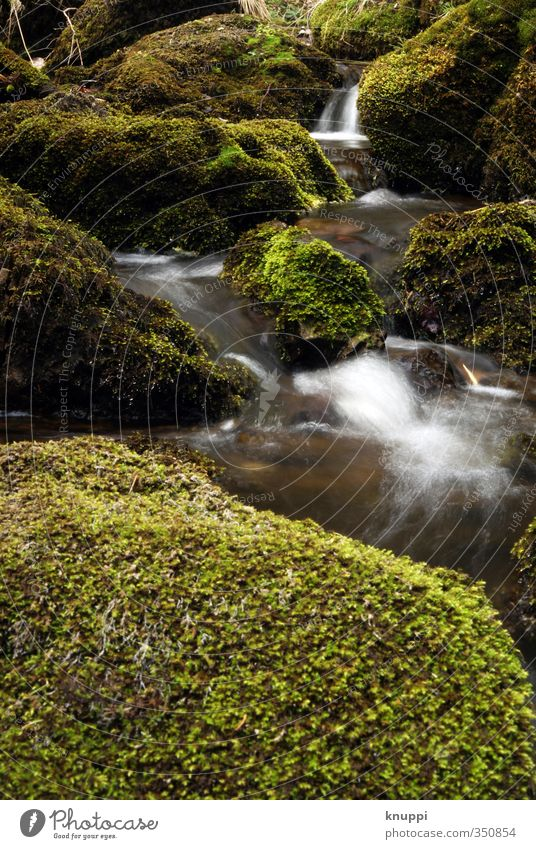 Nature Green Water White Summer Plant Forest Environment Cold Warmth Spring Air Brown Rain Weather Gold