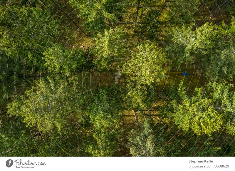 Vertical drone view at top of a green forest at springtime, birds eye view from above. background tree pattern buzzer texture nature sun leaf jump landscape
