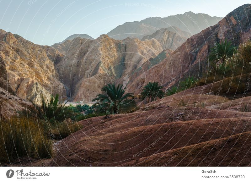 mountain landscape with palm trees and plants in the desert of Egypt Dahab blue blue sky bushes clouds day dry grass green high hot mountain view mountains