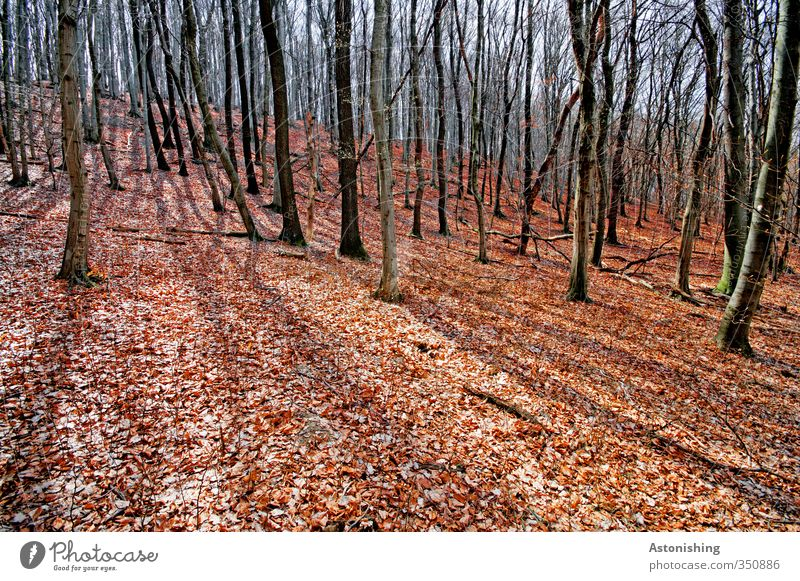 autumn forest Environment Nature Landscape Plant Sky Sun Sunlight Spring Weather Beautiful weather Warmth Tree Leaf Forest Hill Stand Thin Tall Red Black