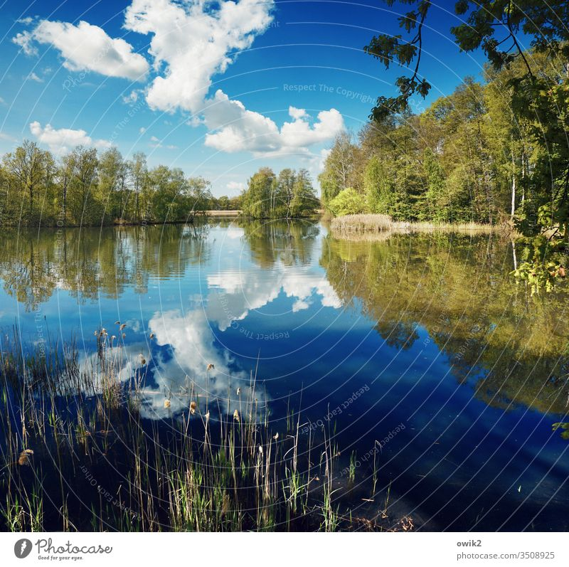 Spring and outside Lake Lakeside Water Surface of water wide Calm Nature Exterior shot Deserted Reflection Landscape Colour photo Idyll Environment