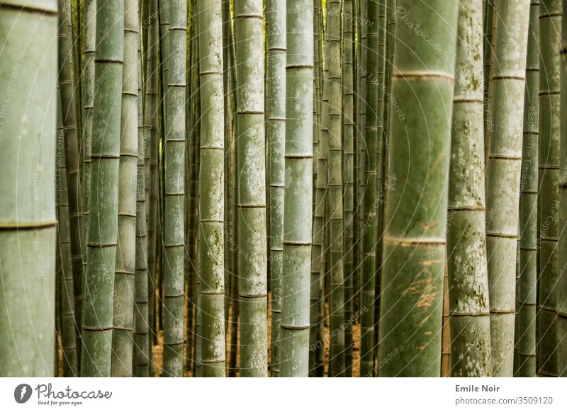 Bamboo forest in close-up Close-up green Japan Forest bamboo forest Asia Bamboo stick background