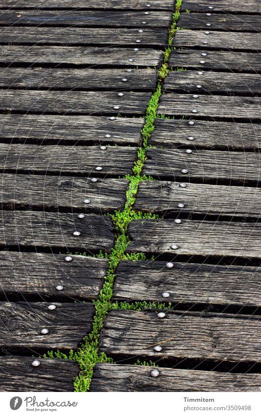 Symmetry | largely Footbridge wood Moss screw head Metal lines green Black Deserted