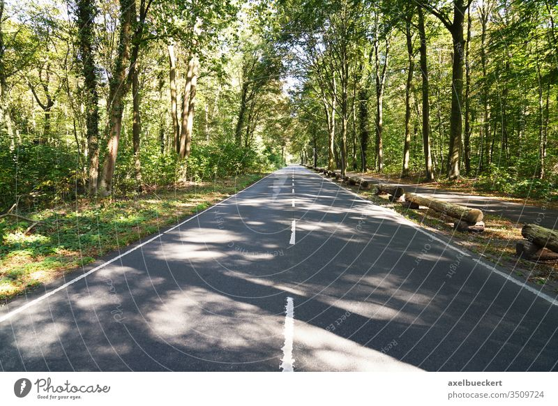 empty two-lane country road through forest street wood woodland travel background woods nature tree-lined highway landscape asphalt summer park scenic scenery
