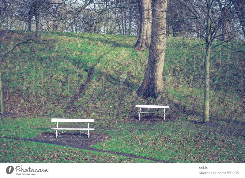two benches Nature Winter Tree Grass Park Dublin Ireland Lanes & trails Uniqueness Natural Brown Green Sadness Grief Loneliness Bench Leaf Hill Isolated 2 White