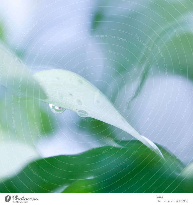 Water drops. Again. Elegant Beautiful Wellness Life Harmonious Well-being Environment Nature Plant Drops of water Sunlight Spring Summer Flower Leaf Blossom
