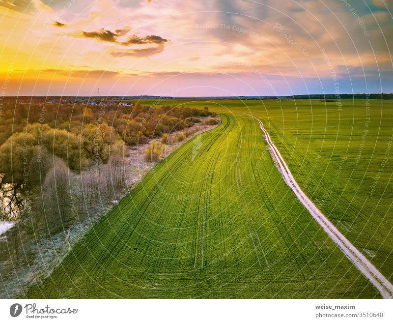 Rural dirt road through spring green fields. Evening countryside scene agriculture rural plant wheat tree river aerial drone forest travel dusk farmland sunset