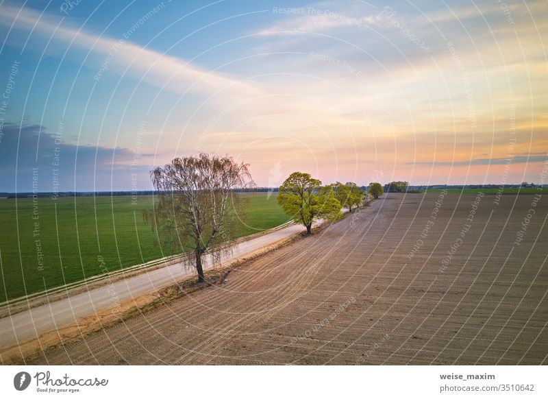 Rural dirt road with trees. Beautiful countryside sunset maple rural plant field wheat spring avenue aerial drone forest travel dusk farmland agriculture green
