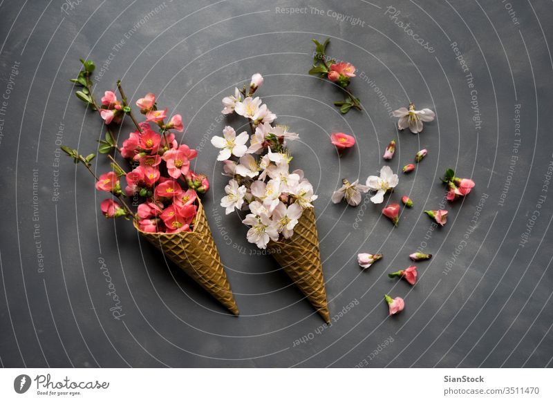 Flowers in ice cream cone on cement background cornet waffle flower flat lay top view flowers pink bouquet nature floral spring gift love romantic valentine