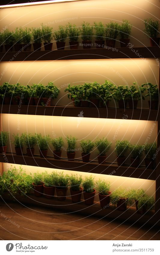 Shelf with many herbs Shelves Cupboard Illuminated green salubriously Light herb corner