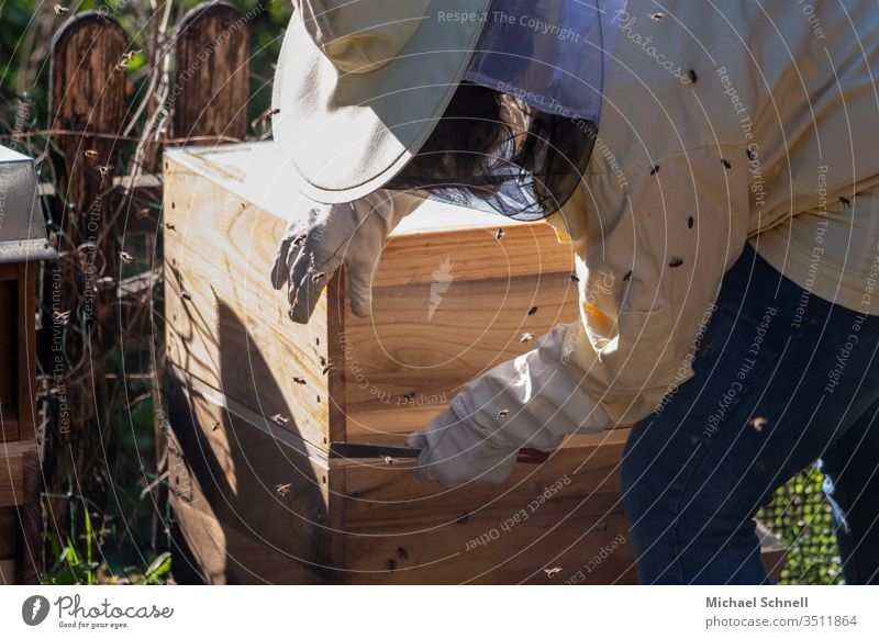 Beekeeper at her beehive Beehive Bee-keeper Bee-keeping Honey Honey bee Insect Nature Apiary beekeeping Honeycomb