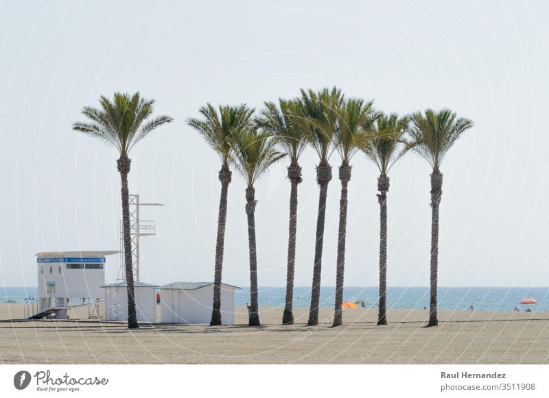 Oasis of a large group of palm trees on the beach of Roquetas de Mar. Large Palms oasis August July Summer Almeria Spain Travel Tourism Holidays sol exotic